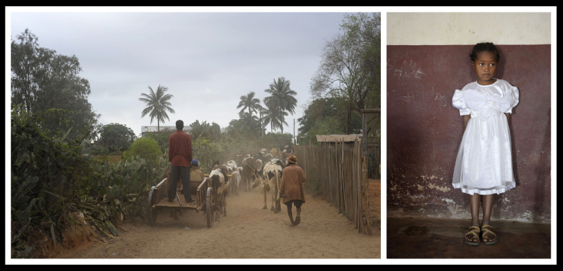 Cattle are driven further and further from Ombovombe village in order to find decent pasture.