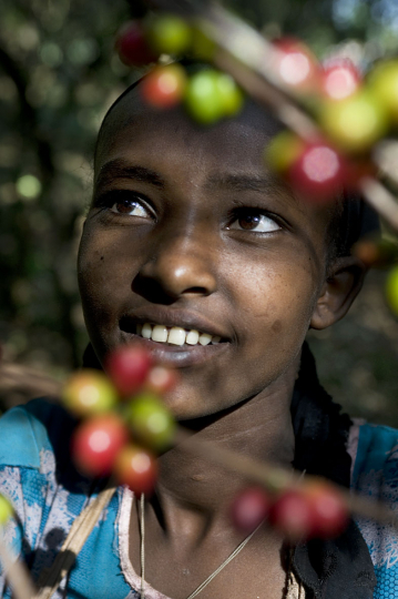Ethiopia, District: Limu Seku, Zone: Jimma, Village: Dego Galcha. 9 January 2010: (Fair trade coffee).