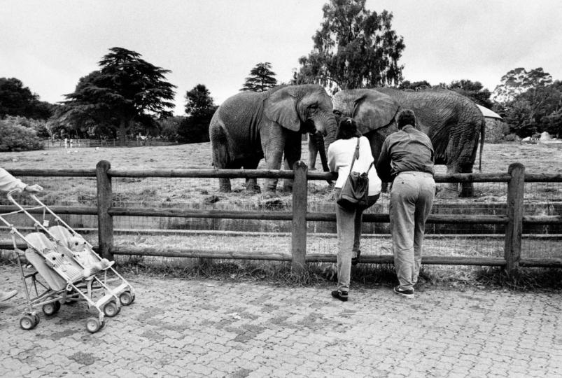 Johannesburg Zoo, Johannesburg, South Africa. 1997